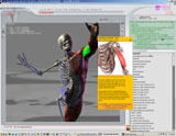 Maste the human anatomy from a 3D perspective