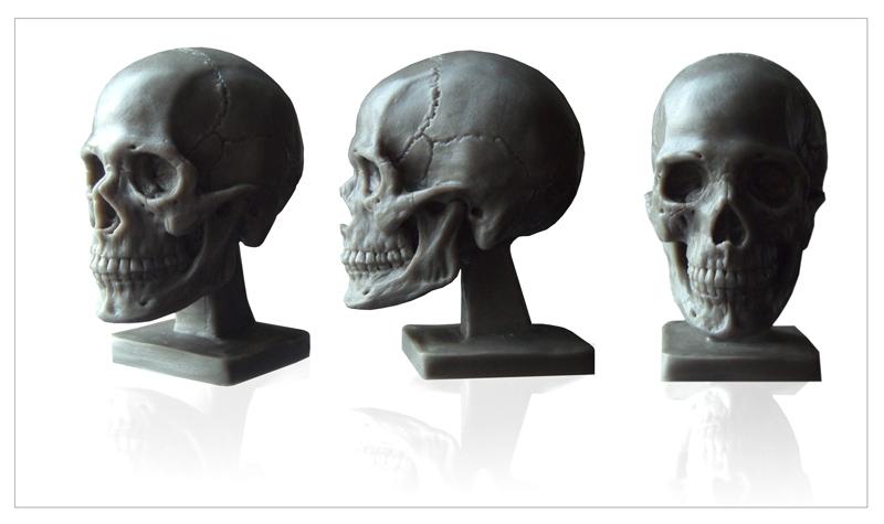 $39.97 human anatomy : human skull model, Skeleton