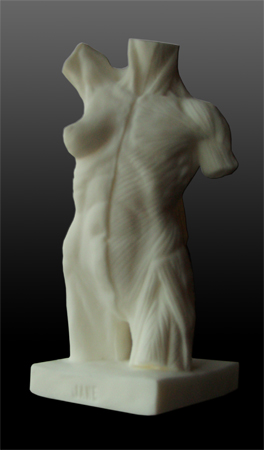ecorche female torso
